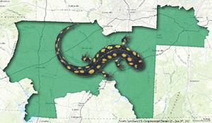 A salamander crawling on a map of North Carolina's 13th District